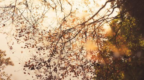 Ehud Neuhaus Amsterdamse Bos, Amstelveen, Netherlands - Unsplash.com